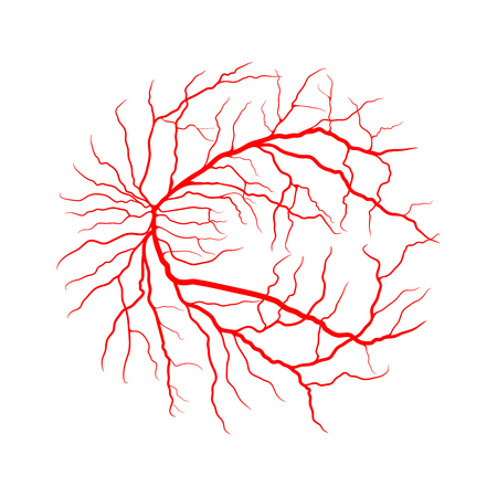eye vein system x ray angiography vector design isolated on white