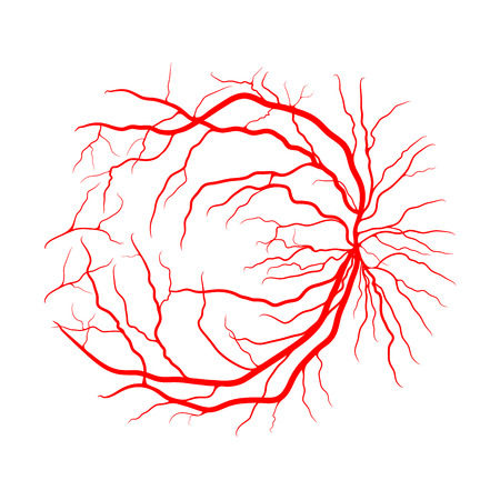eye vein system x ray angiography vector design isolated on white Фото со стока - 103279953