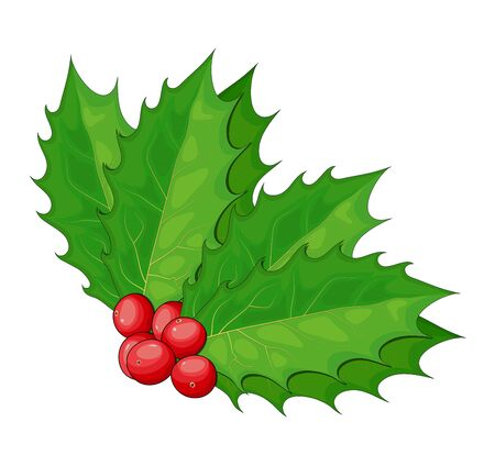 Holly, Ilex Branch with Berry and Leaves, Twig of Christmas Mistletoe isolated on white background. Vector illustration of xmas symbol.