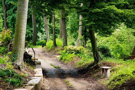 Path in the old green park. Beautiful peaceful Landscape. Preety scenic view of amazing Polish nature. Beautiful green summer forest. Park scenery with a mystery alley