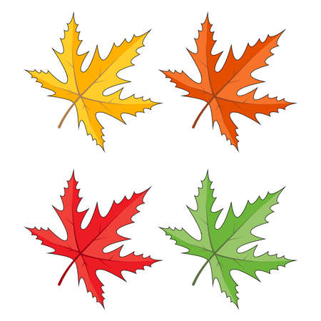 Maple leaves icon set isolated on white. Seasonal clipart in vivid colors. Yellow, orange, red, green, colours. Autumn vector foliage illustration. Colourful falling leaf collection.  Eps 10 . Çizim