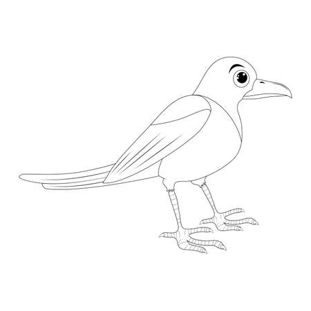 Magpie bird outline illustration set . Standing crow animal ornithology design. Vector clip art isolated on white background.