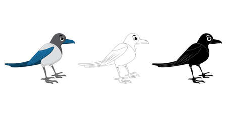 Magpie bird cartoon illustration set . Standing crow animal ornithology design. Vector clip art isolated on white background. Collection contains silhouette,outline and color drawing.