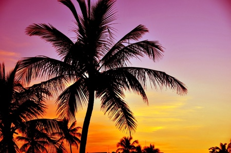pinky: Tropical Sunset. Palm Trees and Pinky Yellow Sunset Sky. Tropical Place.