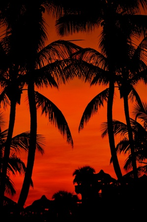 tropicana: Beach Sunset - Reddish Cloudy Sky. Tropical Place Sunset. Palm Shapes. Vertical Photo