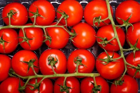 Tomatenfrüchten - Frische Tomaten Direkt vom Bauernhof. Leckere und saftige Tomaten. Lebensmittel angesehen. Standard-Bild - 10642377