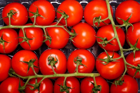 Tomato Fruits - Fresh Tomatoes Straight from Farm. Tasty and Juicy Tomatoes. Food Photo Collection. photo
