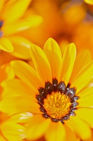 Orange Beauty. Macro Photo of Tiny Orange Wild Flowers. Vertical Photo. Stock Photo - 10642500