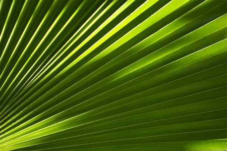 tropicana: Tropical Theme: Palm Leaf Background. Great as Background for Exotic Travel Agency etc. Nature Backgrounds Photo Collection.