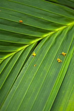 Tropical Palm Leaf Nature Background. Vertical Photo of Palm Leaf. Green Organic and Natural Background. Stok Fotoğraf - 10655073