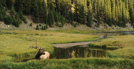 colorado rocky mountains: Male Deer in Colorado Rocky Mountains. Beautiful Mountains Landscape with Small Mountain Lake and the Deer. Panoramic Photography.