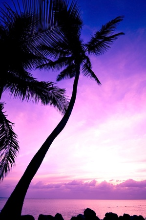 florida landscape: Tropical Sunrise. Beautiful Sunrise at Florida Keys, USA. Vertical Photo Stock Photo