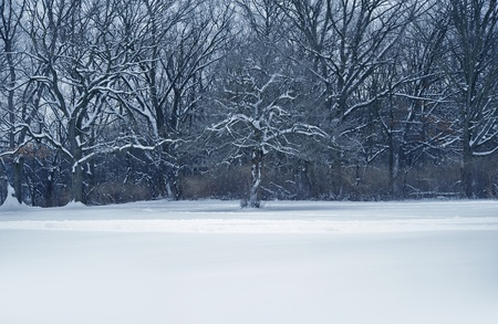 wintry landscape: MIdwest Winter Landscape  Land Covered by Snow and Forest Line  Stock Photo