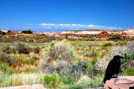 canyonland: Black Raven in Utah Canyonlands Park. Utah Landscape ( Focused on the Crow )