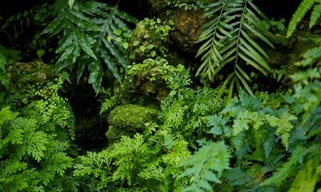 plants species: Rainforest natura sfondo piante della foresta pluviale Fotografia orizzontale Archivio Fotografico