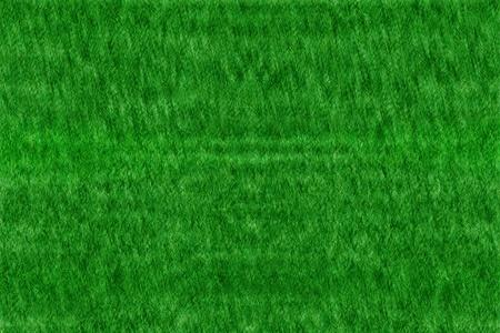grassy field: Grassy Background - Grass Texture Stock Photo