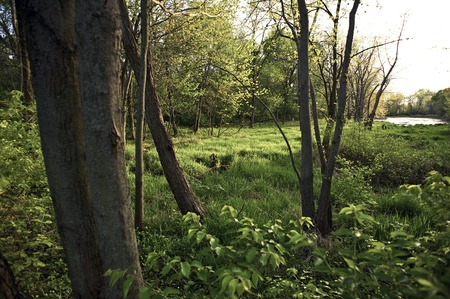 swampy: Swampy Midwest Woods - Mid Spring in Illinois. Nature Photo Collection