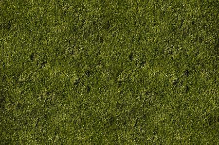 Hi-Res Grass Field Texture - Short Cut Grass Background photo