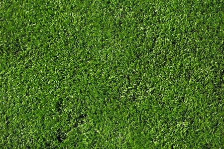 cut grass: Hi-Res Grass Texture. Fresh Cut Grass Field Background (Closeup)