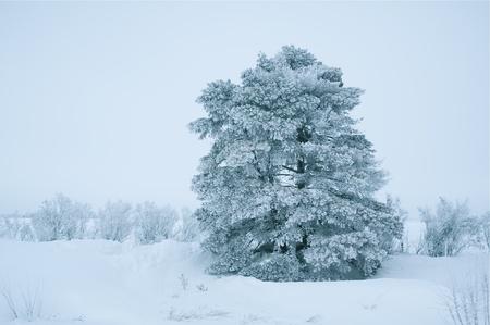 Hard and Cold Winter in Nebraska, USA. Single Tree in Snow Stok Fotoğraf