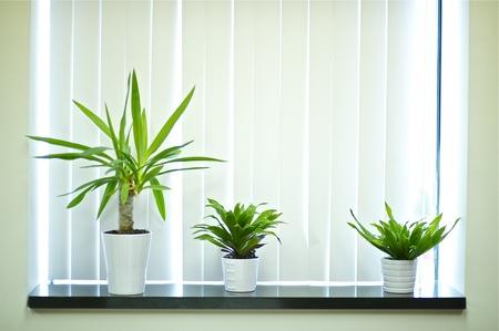 창 장식 식물. 사무실 창