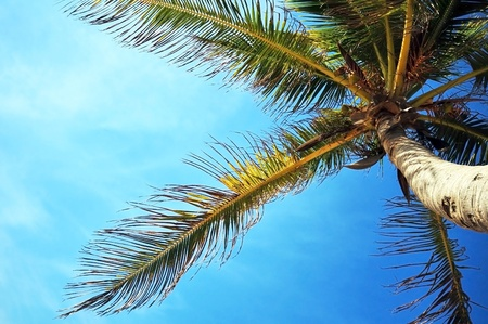 Tropical Nature - Palm Tree and Some Small Clouds on the Sky. Great Traveling - Destination Related Photo.