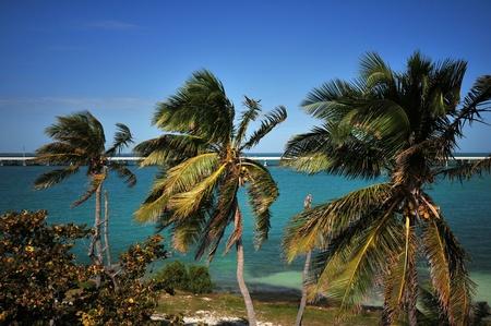 honda: Palm Trees - Florida Keys, USA. Bahia Honda Park.