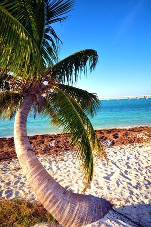 honda: Lonely Palm Tree. Bahia Honda State Park. Florida Keys, USA. Stock Photo