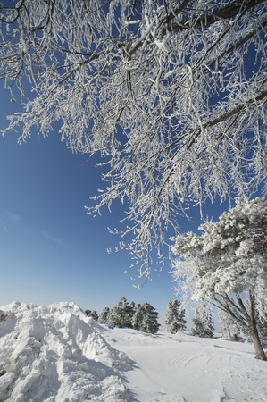 Winter Time in USA Midwest. Trees Covered by Snow
