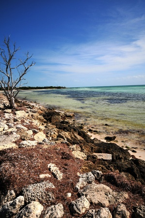 honda: Bahia Honda State Park Beach. South Florida USA. Vertical Photo
