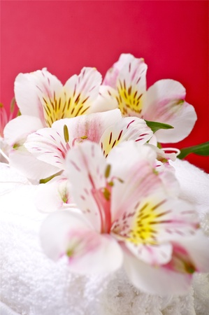 Flowers and Towels - Bath Theme. Red-Burgundy Background.