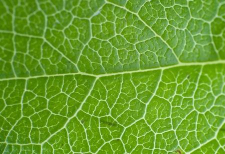 Green Leaf Macro Horizontal Background