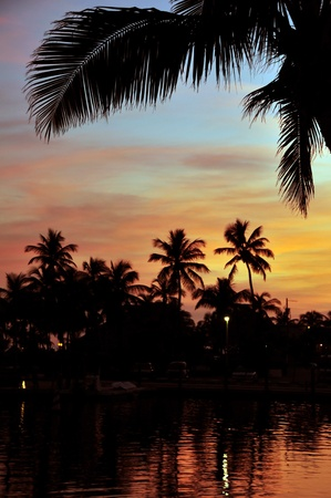 Tropical Sunset. Exotic Island and Palm Trees in Sunset. photo
