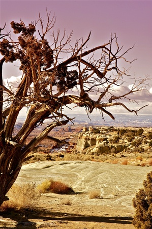 natural wonders: Dry and Raw Utah Canyon Landscapes  Vertical Photo  Early Spring in Utah  Natural Wonders  Stock Photo