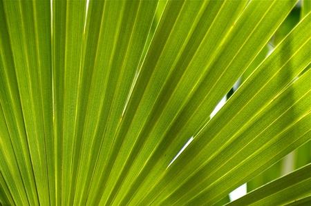 tropicana: Jungle Background  Tropical Palm Leaf Organic Background Photo  Rain Forest Natural Background