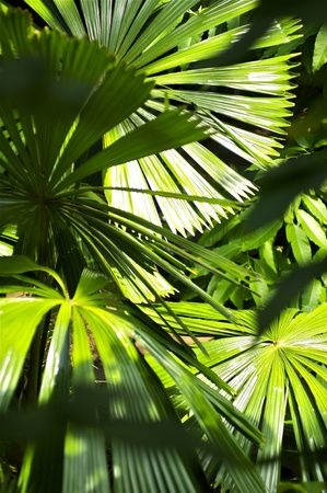 green leafs: Inside the Jungle  Tropical Plants Vertical Photo  Tropical Photo Collection  Stock Photo