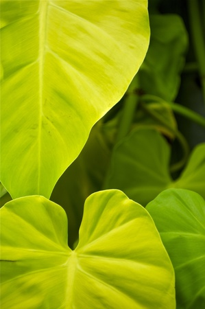 tropicana: In the Jungle  Heart Shape Green Tropical Leafs  Discovering the Jungle  Vertical Photo
