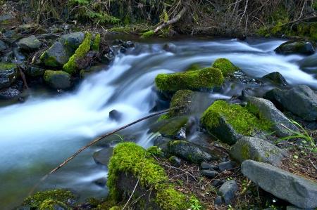 northwest: Washington Rainforest Stream. Mossy Stones. Pacific Northwest Nature Photo Collection