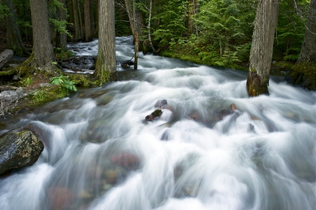 deep roots: Forest Creek and Mountain Stream. Glacier National Park, Montana, U.S.A. Deep Forest Photo Collection. Stock Photo
