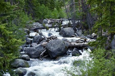 River Creak - Mountain Stream. Yellowstone National Park, Wyoming, USA. Mountains Forest Scenery. Stock Photo - 14300777