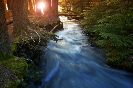 pine creek: Mountain Forest Scenery with Sunlight Coming In Between Trees. Mountain Stream. Nature Photo Collection. Glacier National Park, Montana, U.S.A. Stock Photo