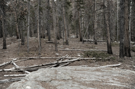 badland: Dead Forest Landscape in Colorado, USA.