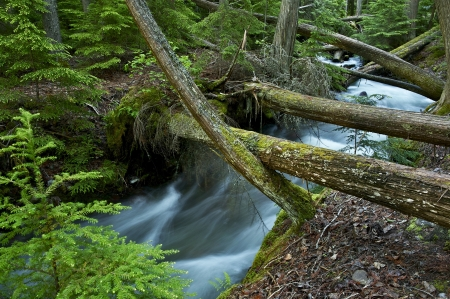 deep roots: Hidden Creek - Forest Landscape with Mountains Stream. Montana Photo Collection.