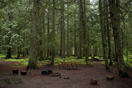 campground: Mossy Forest Campground - Recreation Area. Montana, Glacier National Park Forest. Small Primitive Campground.