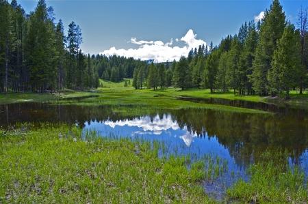 swamp: Small Yellowstone Lake - Yellowstone Plateau. Yellowstone Scenery Photo Collection. Wyoming USA.