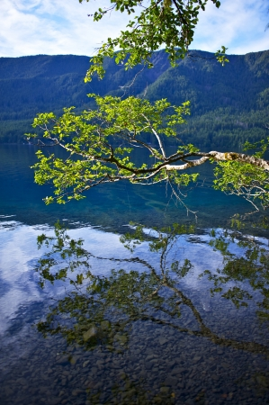 crescent lake: Dark Blue, Crystal Clear Crescent Lake - Branch Above Lake Crescent Surface. Washington State Nature. Vertical Photography.