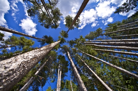 nature photography: The Forest Above Us. Wide Angle Forest Photo. Nature Photo Collection. Creative Forest Photography. Yellowstone National Park.