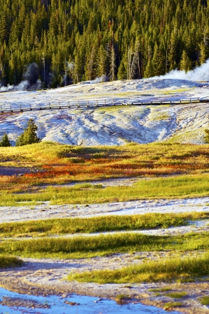 Yellowstone Harsh Conditions. Upper Geyser Basin - Yellowstone National Park, Wyoming, USA. Vertical Summer Photo. U.S. National Parks Photo Collection. photo