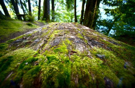 Mossy Wood Picnic Table in Olympic National Park, USA. Recreation Photo Collection. photo