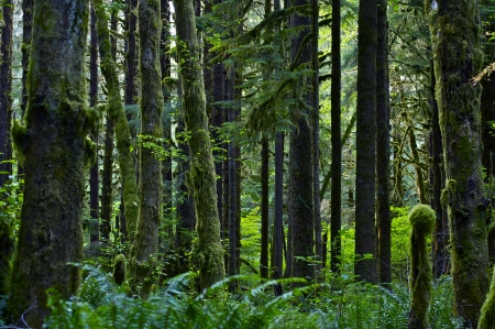 Stato di Washington Rainforest Paesaggio. Foresta Paesaggi Photo Collection. American Pacific Northwest Archivio Fotografico - 14701270